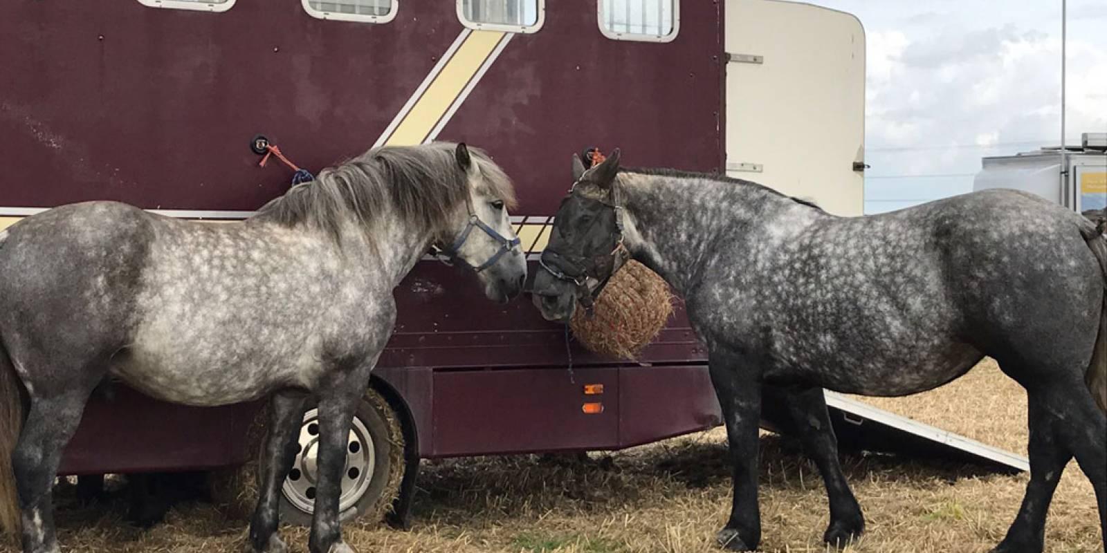 Romney-Marsh-Ploughing-Match-2017-horses.jpg